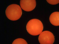 Fluorescent Orange Polyethylene Microspheres Density 1.030g/cc<br>Spherical Polymer Particles Fluorescent in UV Light